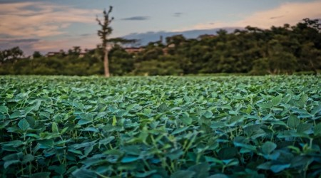 Sustainable Soy and China's Going Global Strategy_1