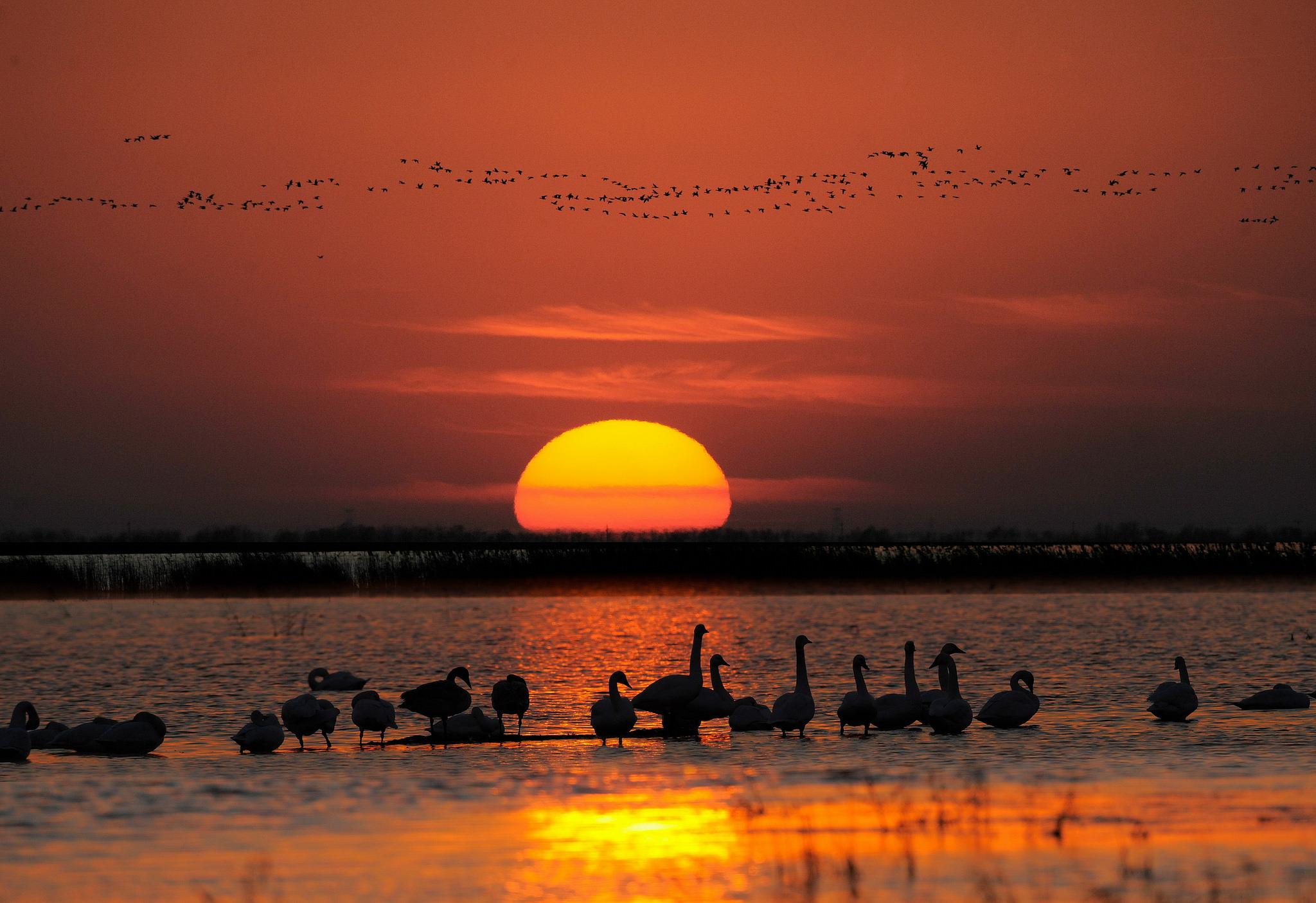 wetlands sunet